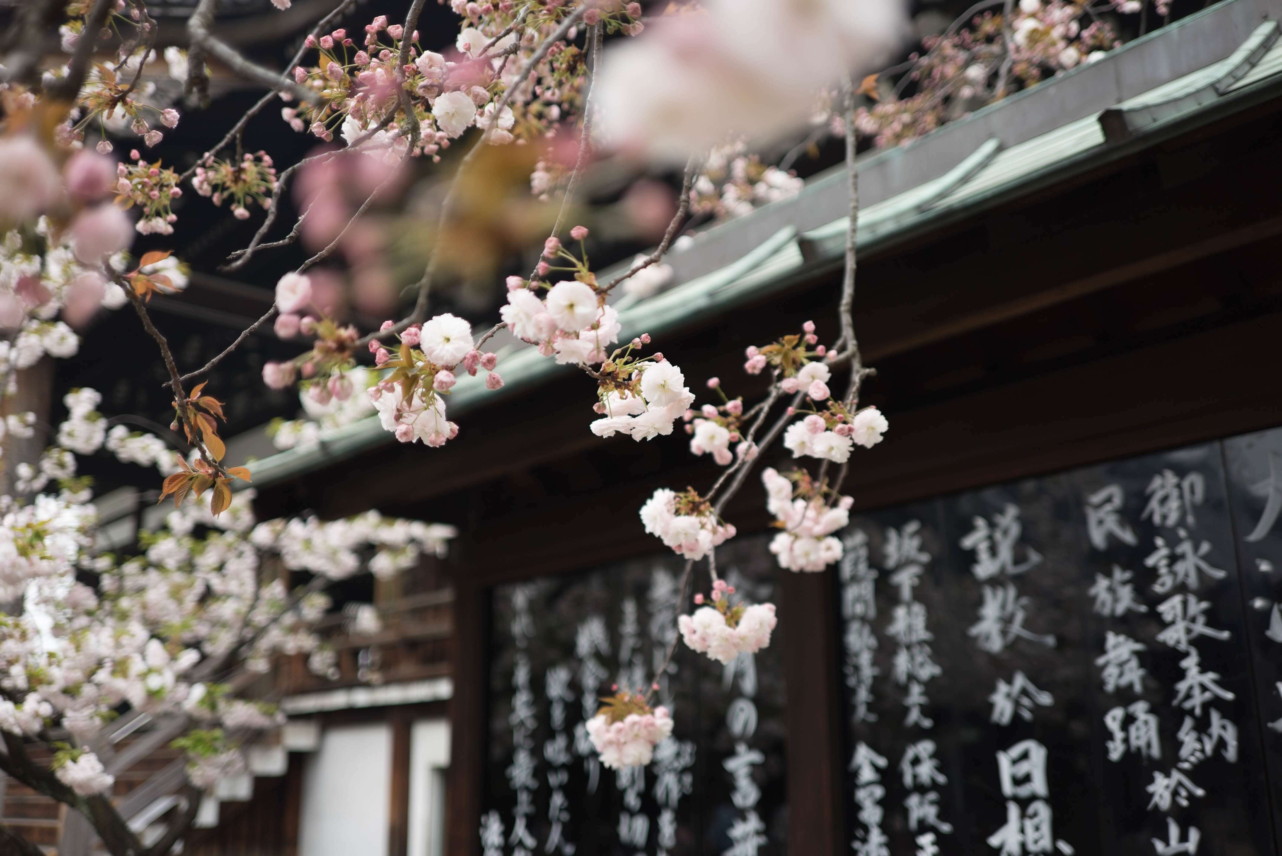 Photo of Beautiful Japan in Pictures Vol. 2