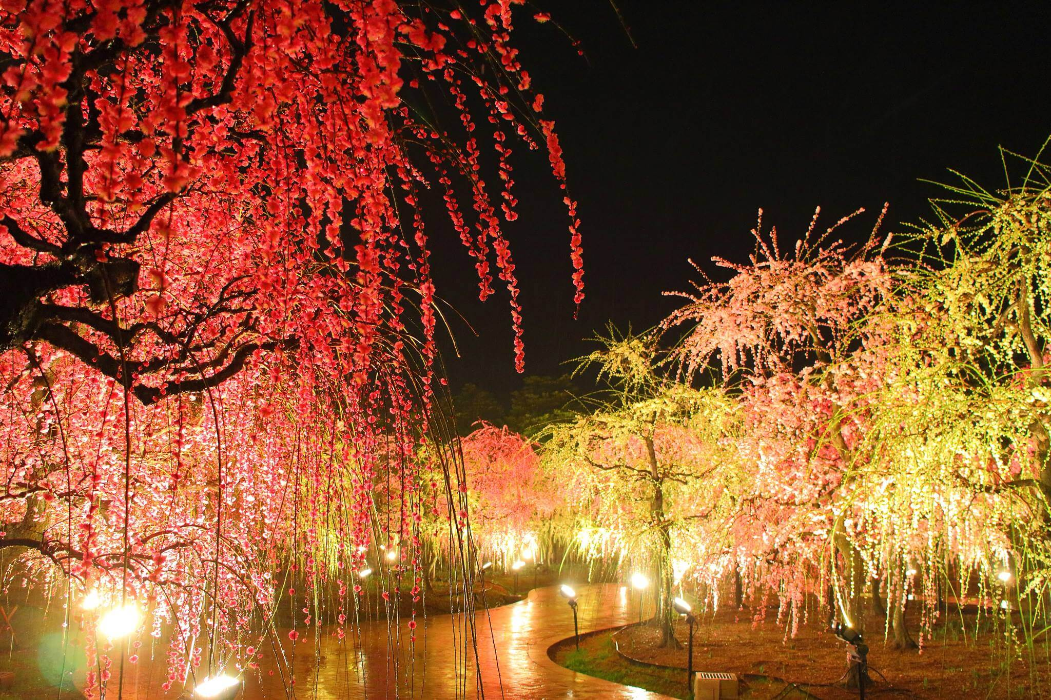 Photo of Fascinating Winter Illumination at Nabana no Sato