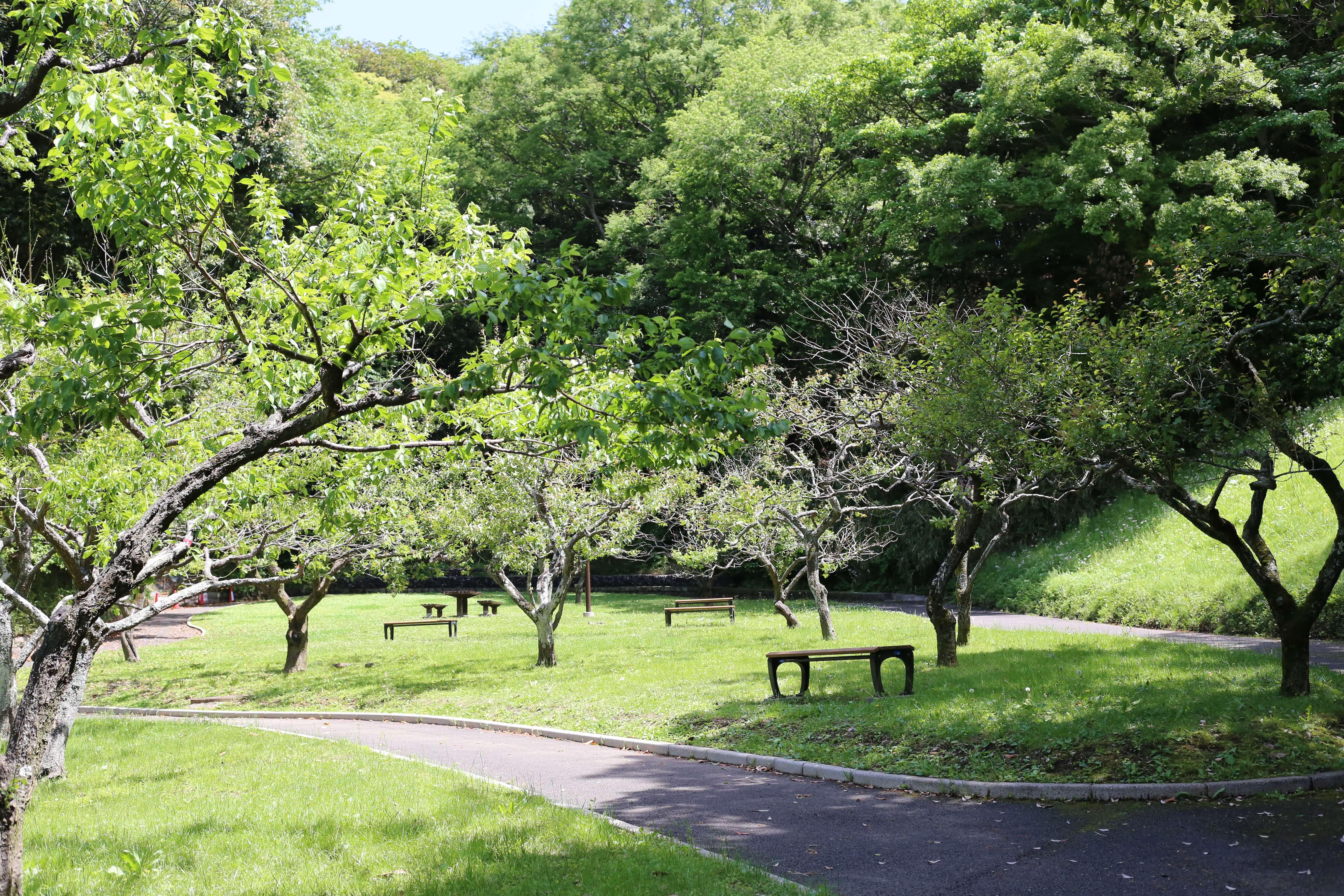 Photo of Một mình lạc giữa rừng xanh công viên Kurakikouen