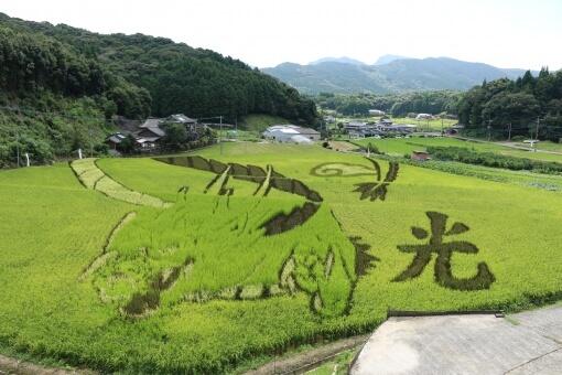 Photo of Nghệ thuật trong việc trồng lúa của người Nhật